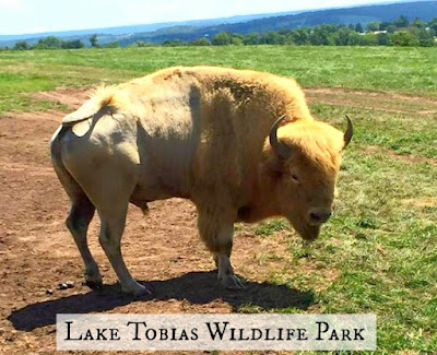 Lake Tobias Wildlife Park and Zoo in Halifax Pennsylvania
