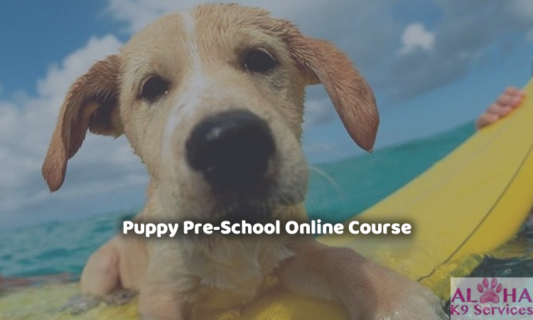 Udemy coupon code free discount coupons promo codes puppy pre school professional dog training course fandeluxe Image collections