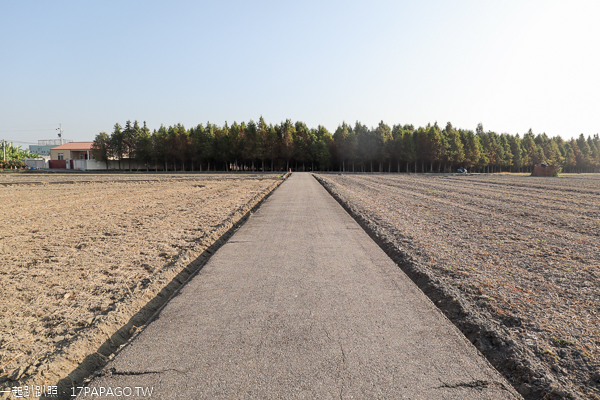 台中大里落羽松秘境,數百棵落羽松隱藏在農田旁