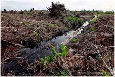Jenis Persebaran Tanah di Indonesia Gambar