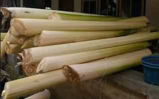batang pisang