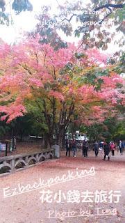 10月內藏山紅葉