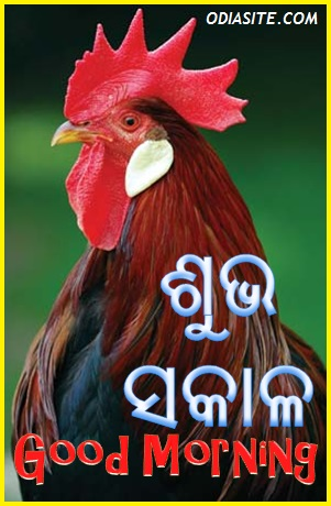 Best Ever Good Morning Images For Whatsapp In Odia Quoteambition