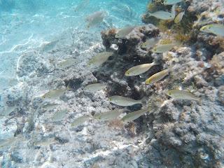 Kicsi halak Mitjana partjához közel