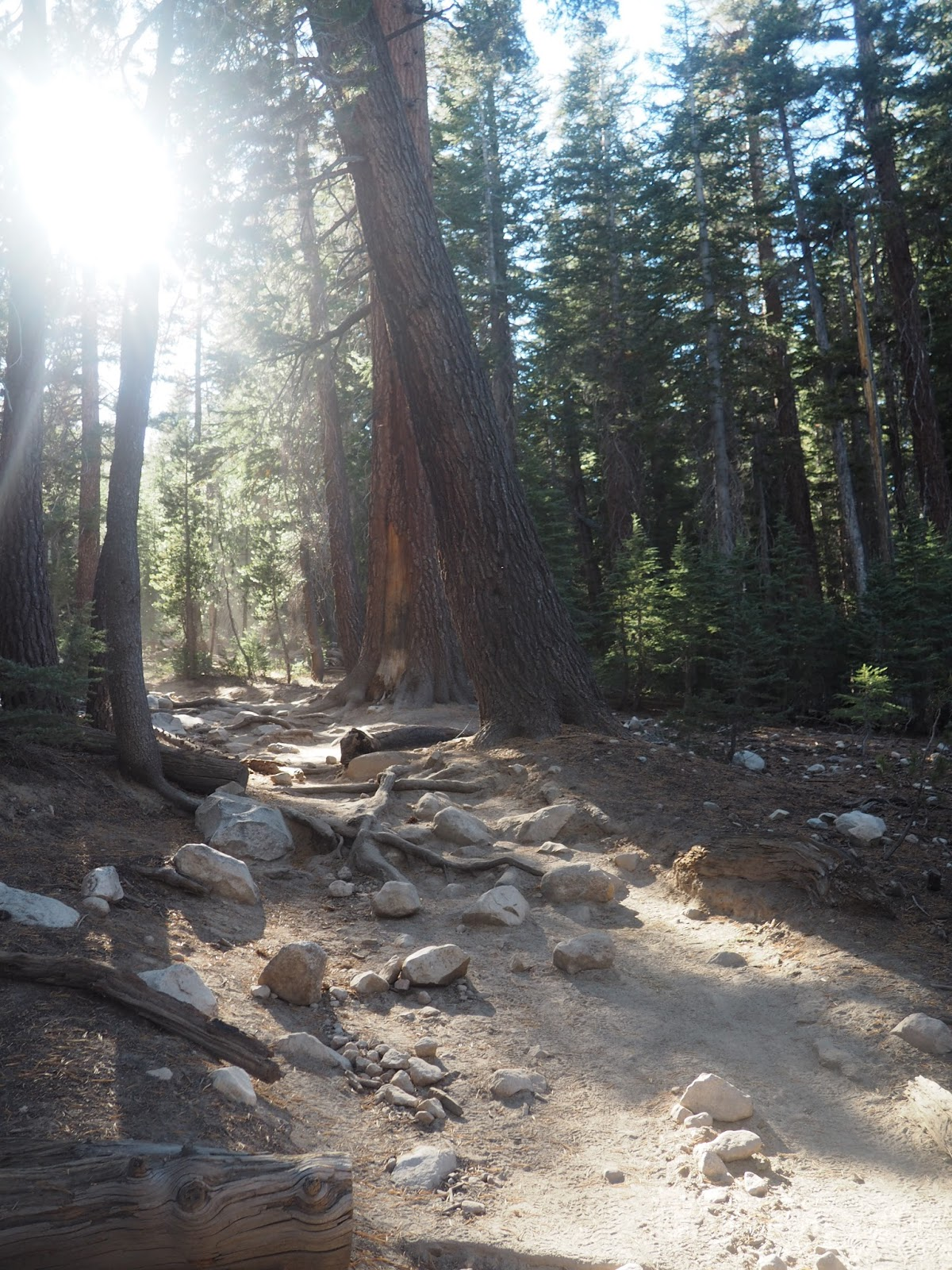 Forest in Yosemite National Park, California