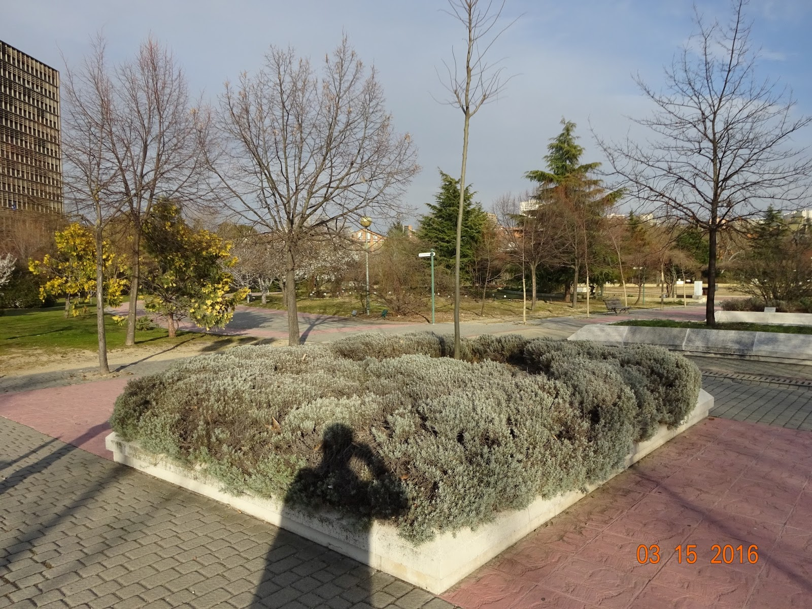 Han ganado los malos los abedules del bot nico universitario for Jardin botanico ucm