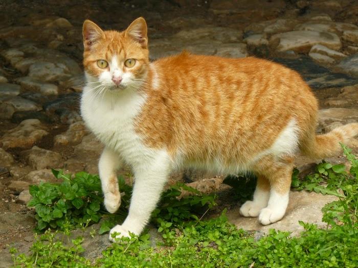 Leagănul pisicii - Wikipedia