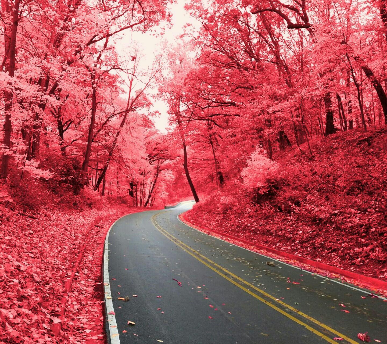 Fall Leaf Iphone Wallpaper Fashion Show Mall Jobs Pink Autumn Hd Wallpaper
