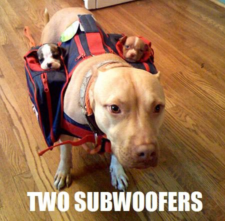 Funny Two Subwoofers Dog Picture
