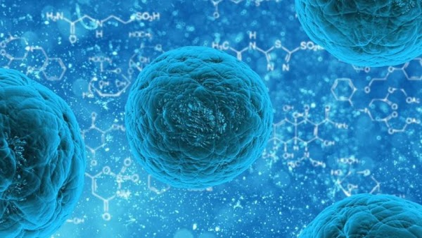 Japón aprueba un tratamiento con células madre para lesiones de la médula espinal