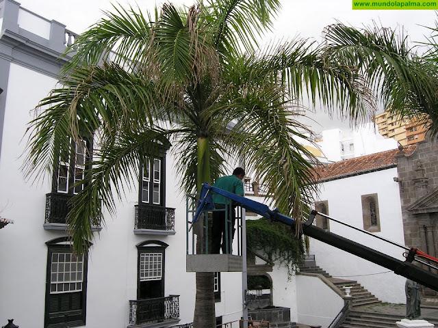 El Ayuntamiento de Santa Cruz de La Palma inicia este martes la poda y tratamiento de más de 150 palmeras del casco urbano
