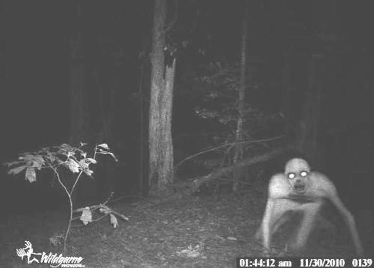 14 صورة مرعبة تم تصويرها بكاميرات مراقبة  سرية في الغابة  ..لا ينصح أصحاب القلوب الضعيفة بمشاهدتها
