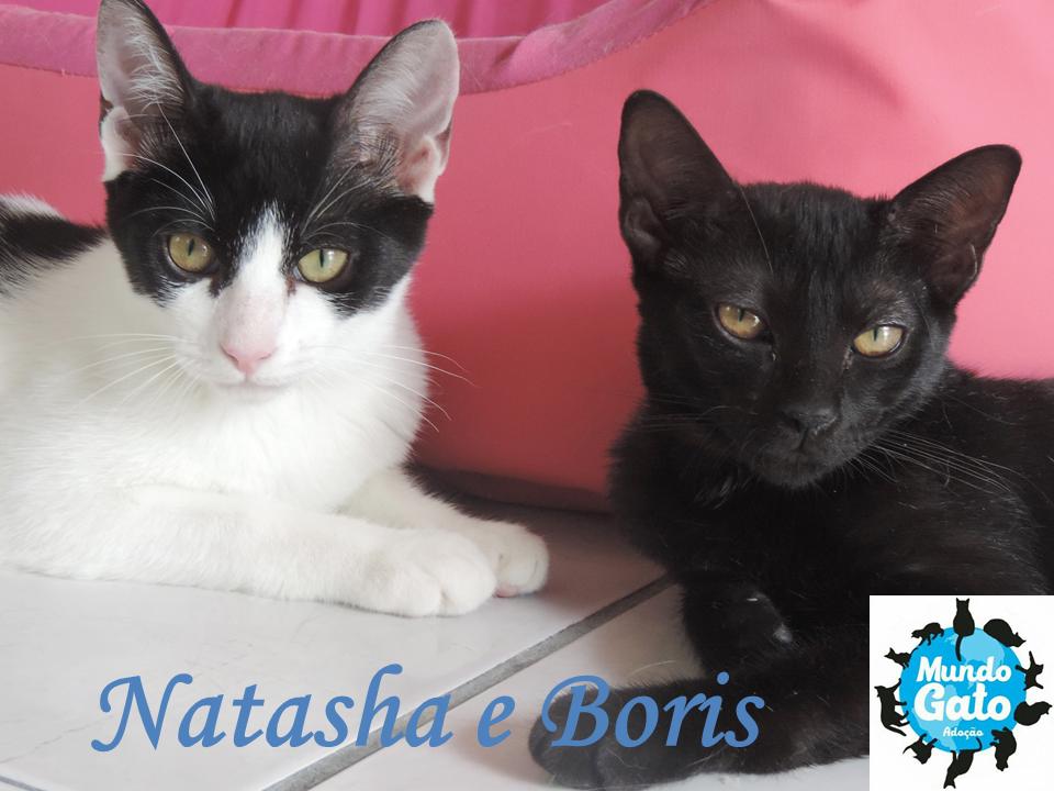 4ebd6dd2624e7 Muito obrigado pela sua ajuda com a doação na campanha Kickante.A sala dos  filhotes ficou muito legal! Obrigada mesmo!Temos muitos gatinhos agora e  podemos ...