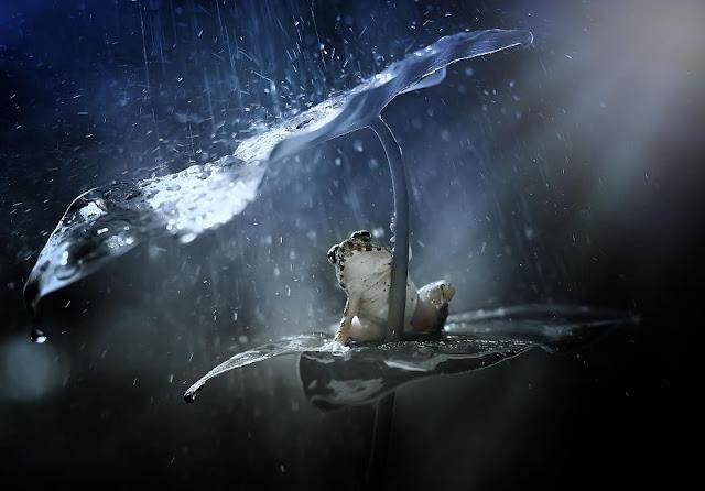 Animals With Natural Umbrellas. Creatures + rain = umbrella
