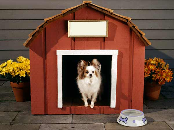 The House Of Dog
