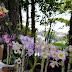 9º Abraço do Lago e plantio de orquídeas