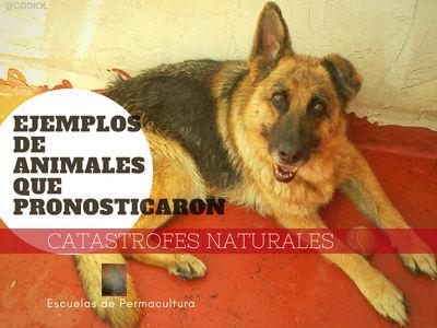 Ejemplos,  y el porque los Animales Predicen los Desastres Naturales