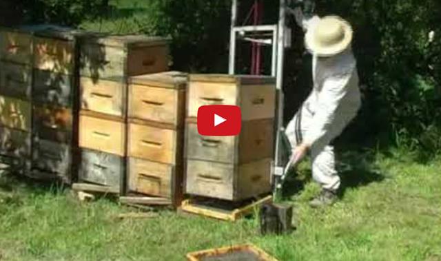 Ένα ωραίο μελισσοκομικό εργαλείο για φόρτωμα μελισσιών video