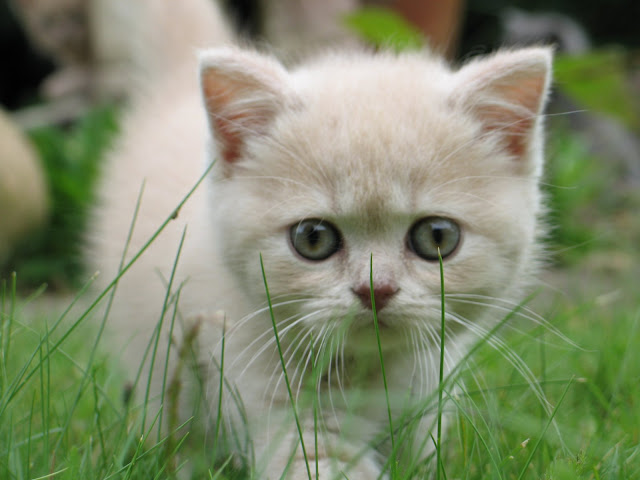 gatitos tiernos, teamoimagenes.com