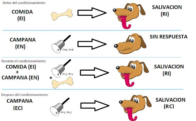 Resultado de imagen de perros de pavlov