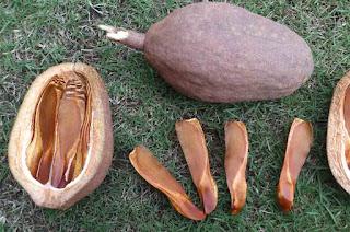 Health Benefits of Mahogany Tree