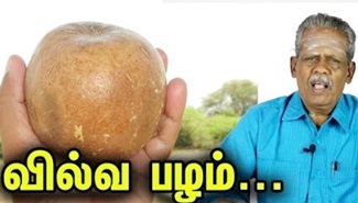 Vilvam Fruit Health Benefits in Tamil