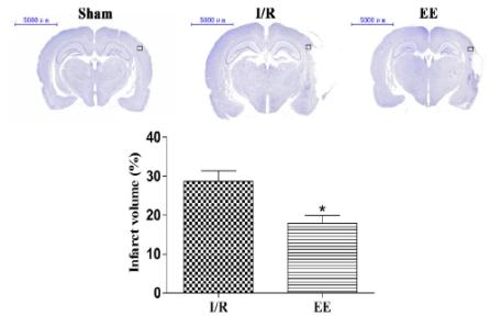 図:刺激豊富な環境と脳梗塞ボリューム