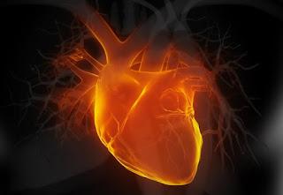 Az agy és a szív kapcsolata. Döbbenetes kutatási eredmények!
