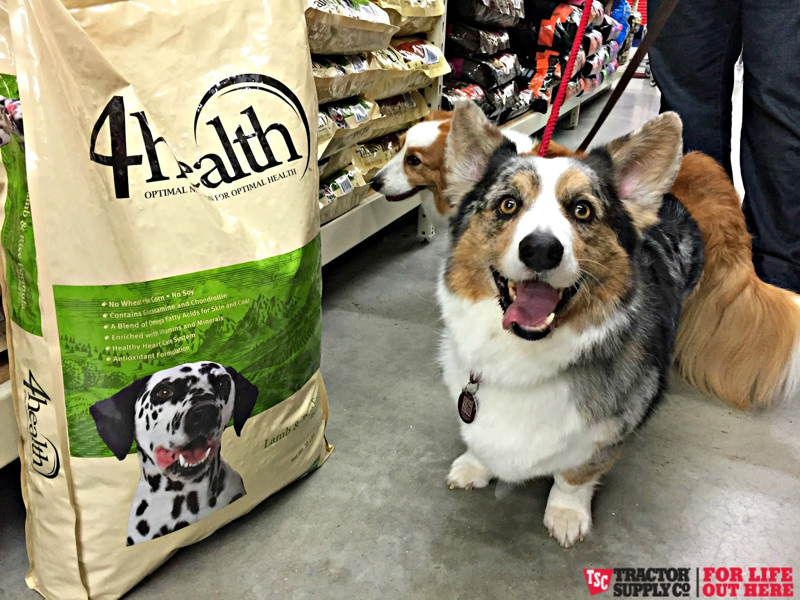 Is Great Life Pet Food Sold In Stores