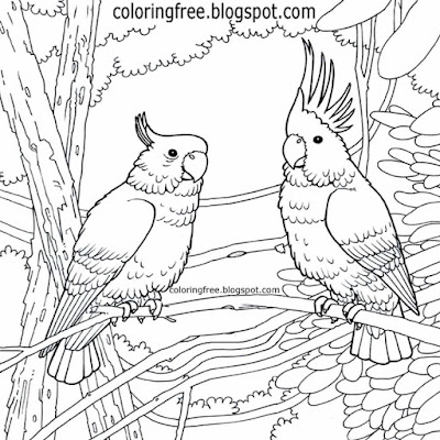 Dawn chorus native beautiful birds Australian colouring pages king parrots Sclerophyll forest life