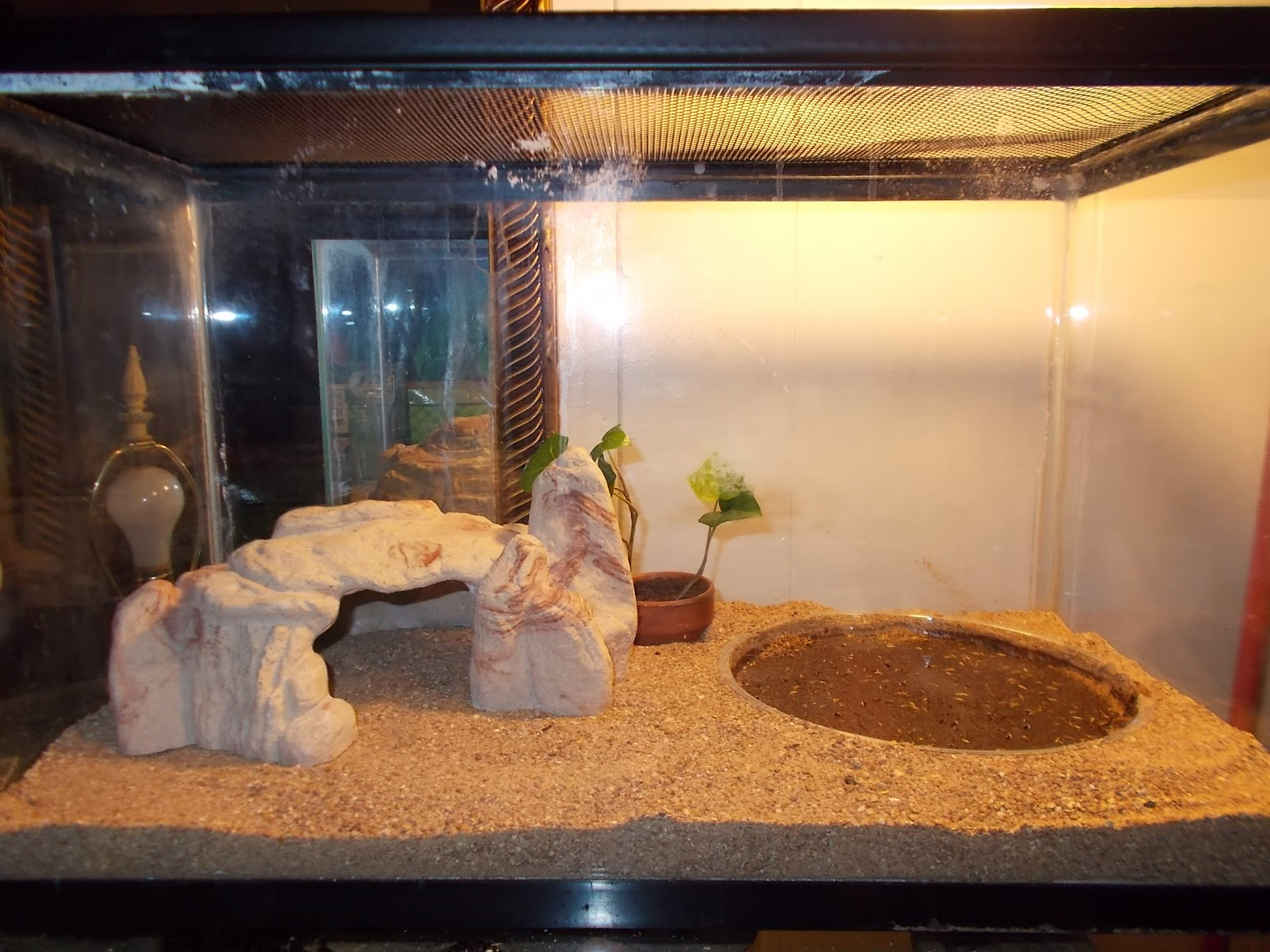 Hermit Crab Terrarium