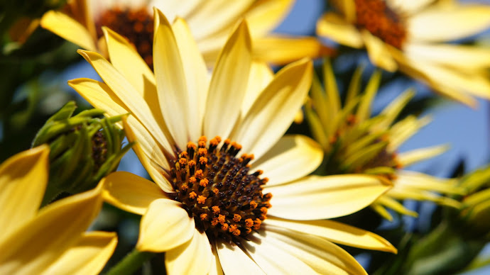 Wallpaper: Yellow Flowers