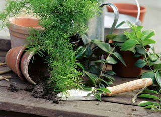 http://prazdnichnymir.ru/ Заговоры для ухода за растениями