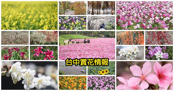 2019台中賞花景點資訊情報|賞花活動|花況訊息|花海位置|持續更新
