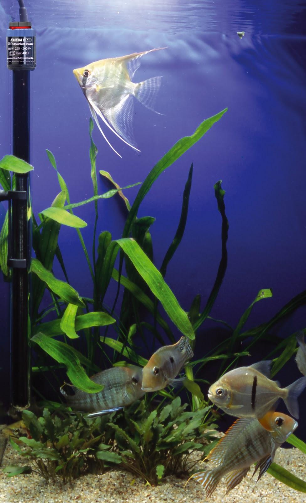 Tips Rahasia Sangat Mudah Menjaga Suhu Aquarium Waterdecor Splashnews Informasi Seputar Dekorasi Air Mancur Aquarium Kolam Dan Pets