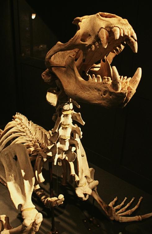 Royal BC Museum Victoria