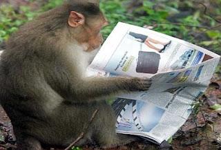 Οι «μαϊμούδες» και οι λούηδες