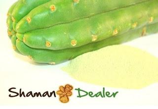 https://www.shamandealer.com/en/sacred-herbs/108-san-pedro-inciense-powder.html