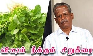 Siru Keerai Health Benefits in Tamil