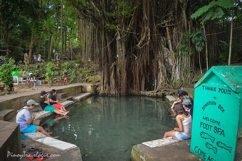 "Siquijor's old and ""enchanted"" Balete Tree"
