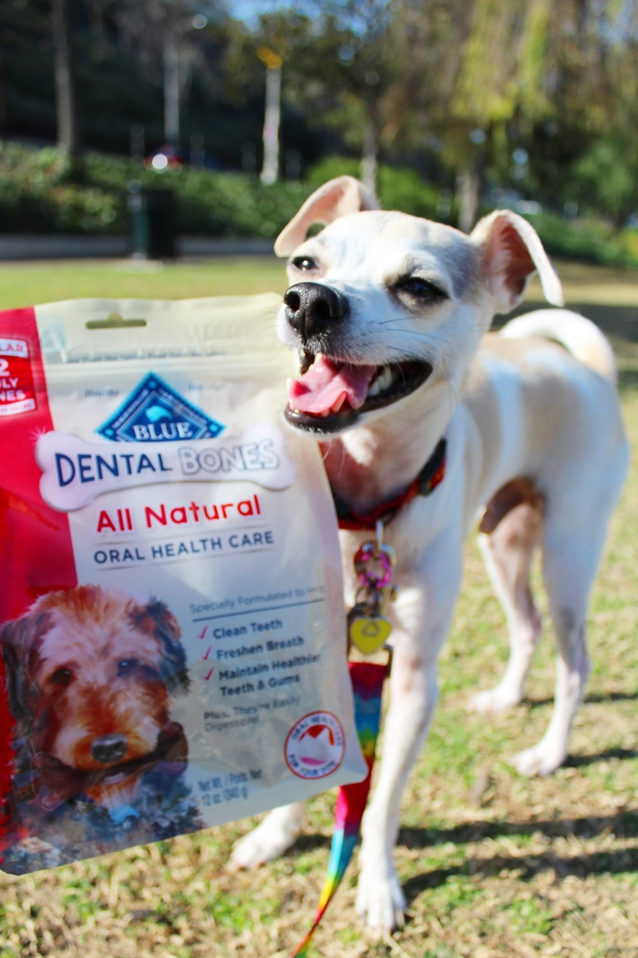 Blue Buffalo Dental Bones Review