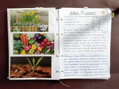 Programmare l'orto: calcolare lo spazio a disposizione