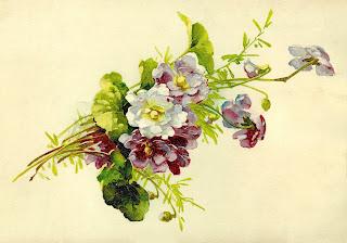 wildflower art botanical flower artwork digital clipart image