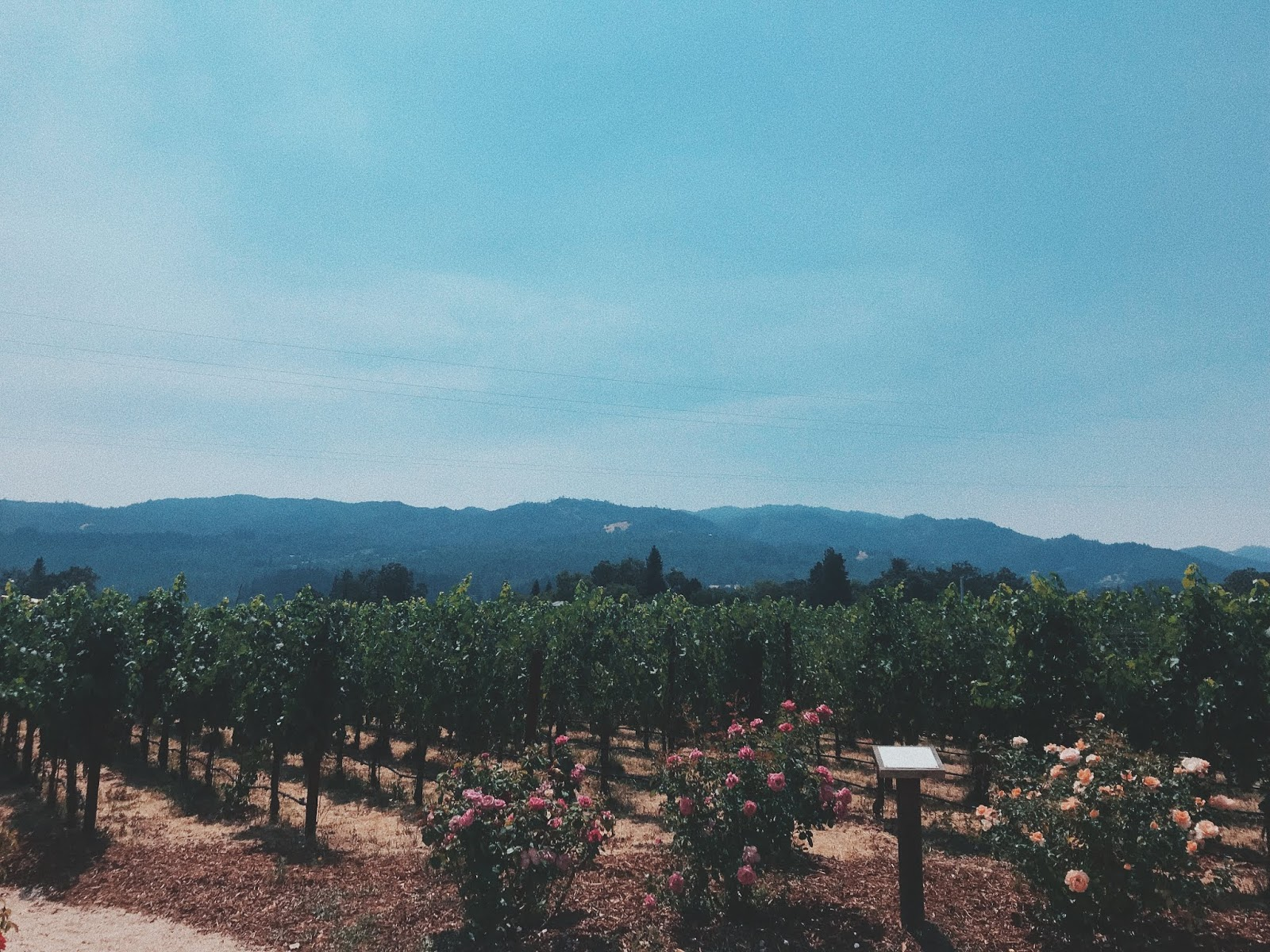 NAPA PHOTO DIARY | AESTE BLANC