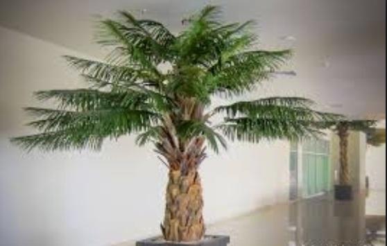 Bonsai kelapa sawit juara populer