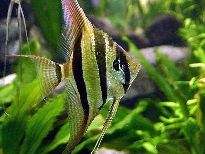 Popular Types of Freshwater Aquarium Fish | Best Living ...