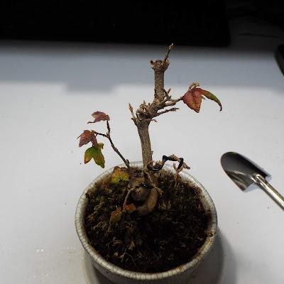 盆栽とスコップ