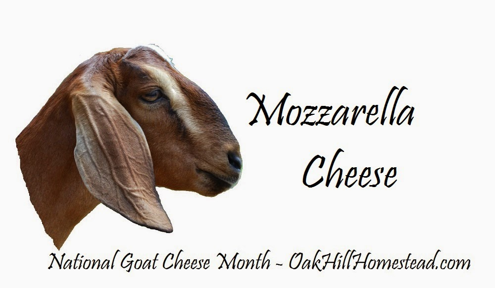 National Goat Cheese Month: Mozzarella