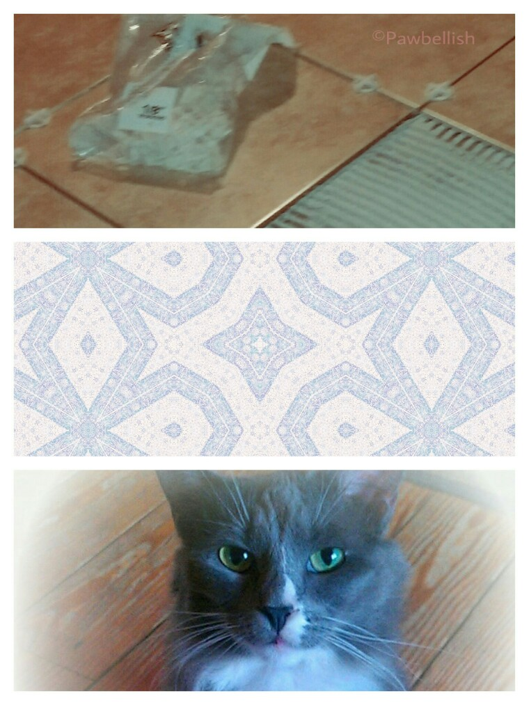 Flooring options, such as ceramic tile, linoleum, and hardwood versus carpeting, for the multi pet household