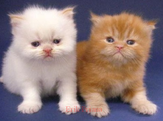 10 Cara mudah Merawat Kucing Peliharaan Untuk Pemula